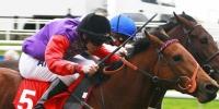Trading em Cavalos