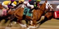 cavalos_cab2-300x224